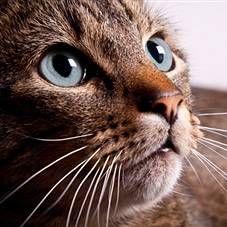 Koľko rokov žije mačka, mačku a storočných