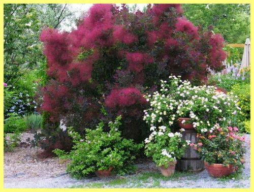Dim sadnju drveća i Foto njegu