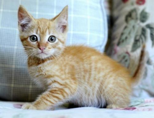 Socializácia mačiatok a mladých mačiek