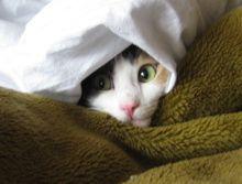 Sfaturi pentru îngrijirea pisica în timpul iernii