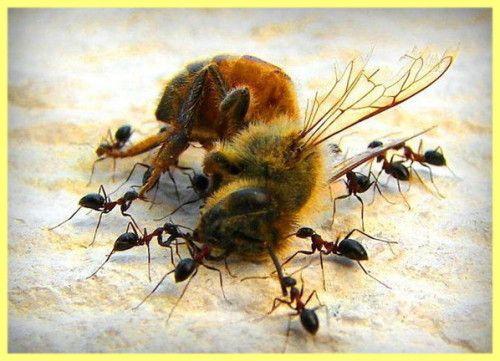 Stupul moderne pentru albine