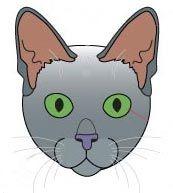 Korat котки порода стандарт.