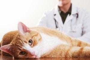 Raportul dintre medicii veterinari pentru a elimina unghii