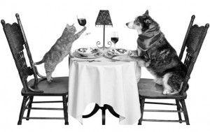 Хранене за котки