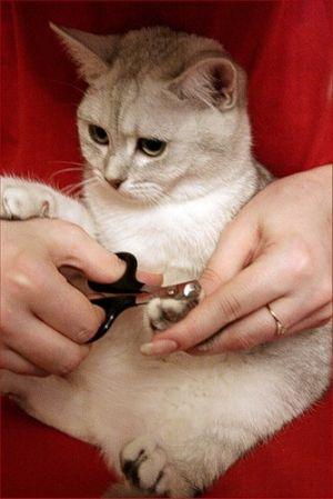 Grooming ghearele pisicii