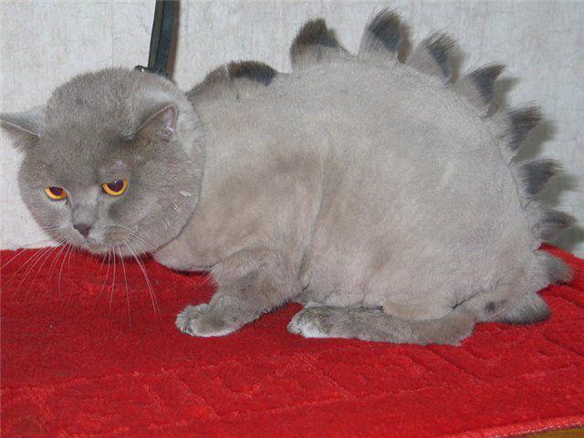 účes mačky