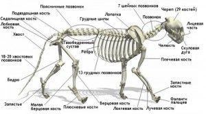 Структурата на котката