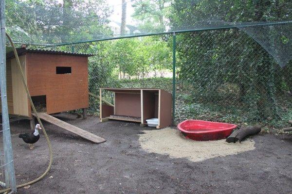 Duck într-o cușcă de lângă casa de păsări de curte