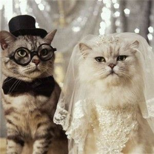 Сватбени котки