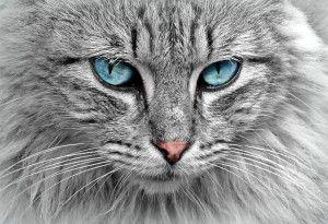 mačka look