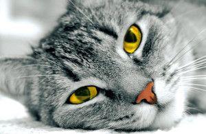 mačky vyzerať