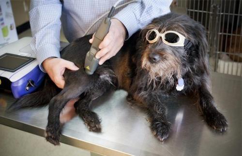 Terapeutický laser pre zvieratá