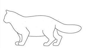 Tipul de corp greu de pisică
