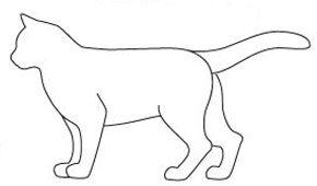 Stilul de corp pisica semi-cobby