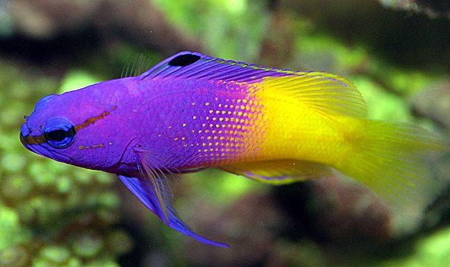 Top 5 skupi akvarij riba
