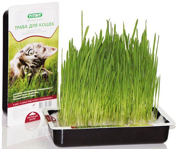 Kako posaditi travu
