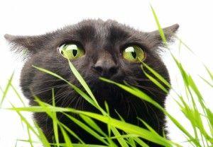 Tráva pre mačky