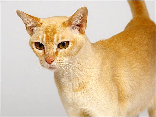 Red cat. Fotografie, Photo Image