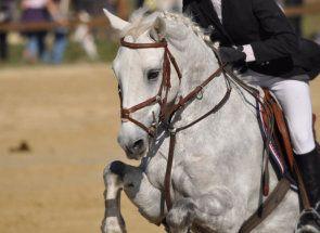 A învăța cum să șa și plimbare un cal