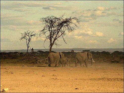 Africa. Elefanții. Foto, Foto