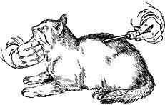 grooming mačke