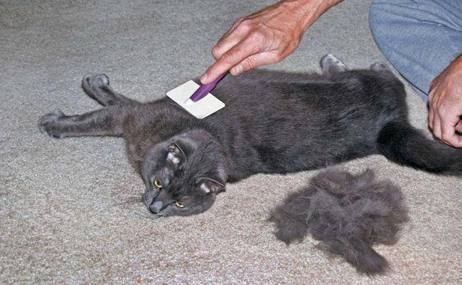 Mačka mačke mogu češljati jednom tjedno
