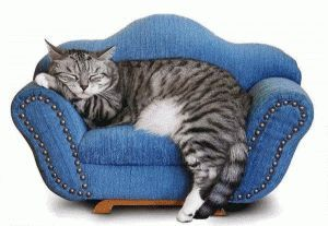 Условията на живот на домашната котка
