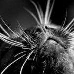 fúzy mačky