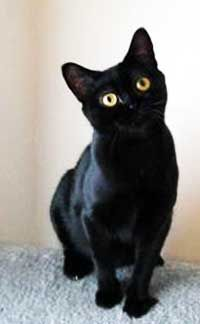 Negru Culoare - bombay