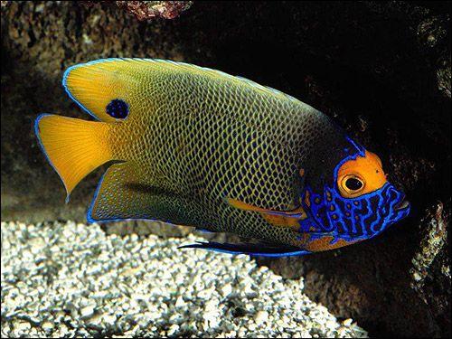 Морска риба, снимка на картината
