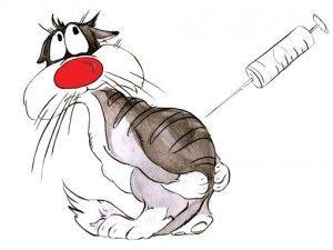 Котки ваксинация