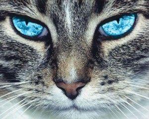 Вашата котка - психически!
