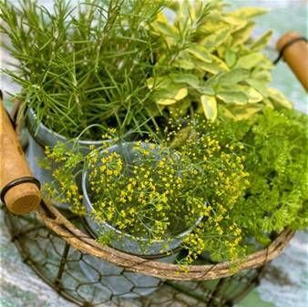 Spring Green: odroda, dobrý, ako je to