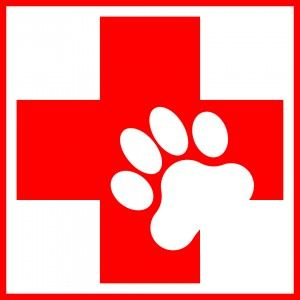 Ветеринарни аптечка за котки