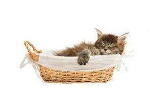 Да котките имат мечти