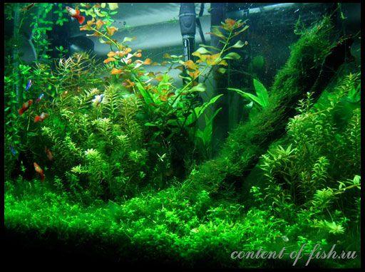 Vrste vodene biljke