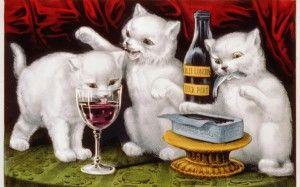 Víno pre mačky