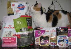 Suché krmivo a konzervy pre mačky