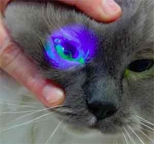 Výtok z očí mačky