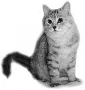 Образованието на британските котки. Продължение.
