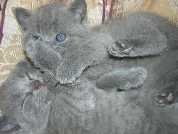 obrazovanje mačići