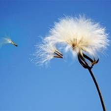 Vzduch, ktorý dýchame: Najviac škodlivé látky v ovzduší, ako sa chrániť pred škodlivými kontaminanty