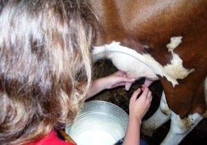 Toate nuanțele de vaci de muls pentru incepatori