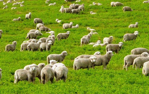 Păstoritului în sezonul de vară