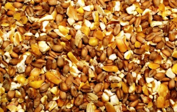 zernosmes Dry hrănirii puilor