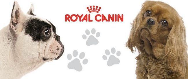 Psy rôznych plemien a emblémom Royal Canin
