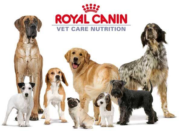 Psy pod znakom Royal Canin krmivo pre domáce zvieratá