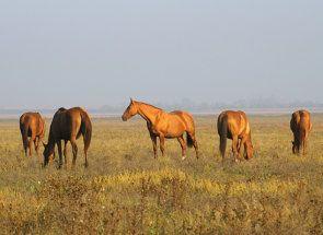 Enduring frumusețea din adâncurile cazacilor Stepa - Don cal