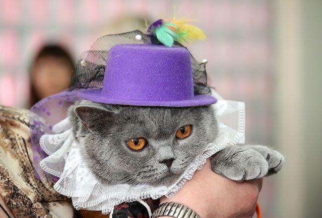 Cat Show Mart marte21 regularnom mačaka, kojem su prisustvovali britanskih i moja mačka. Ne samo učestvovali, ali su dobili nagrade u više kategorija! Izložba je održana u svečanoj i svečanoj atmosferi, takmičenja o