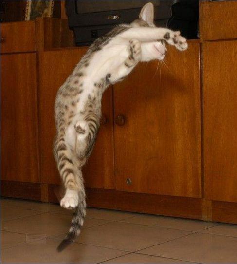 Rozsiahla zbierka vtipné mačky (95 photos)